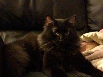 King Jasper, Age 2 Years in his Forever Home! ADOPTED 8/31/13
