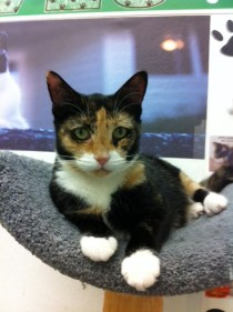 jANINE - ADOPTED 12/3/13