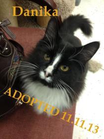 Danika - Adopted 11-11-13