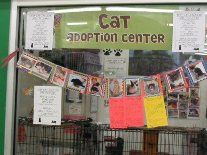 TLC/PSP E. Amherst Cat Room
