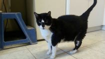 Aaron - 8-10 years old and is front declawed. He's very sweet and loves belly rubs!