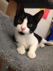 Mr.B Kitty! 4 Months Old