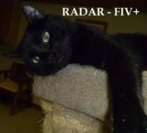 Radar - Approx. 2 Yrs. Old