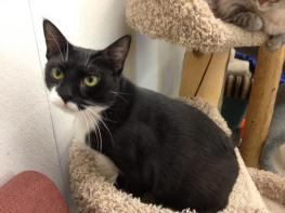 Pretty Miss Mary! 1-1/2 Yrs. Old & Super Sweet!