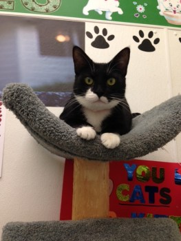 Miss Mary - 1-1/2 Yr. Old B&W Tuxedo Girl!