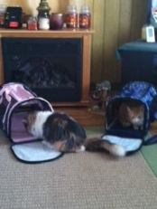 Gina & Tommy checking out their new carriers