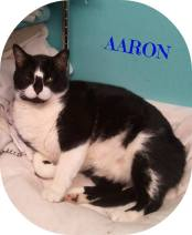 Aaron is a super sweet 8 - 10 year old boy who is declawed.