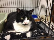 Chevon - 7 Yr. Old Female