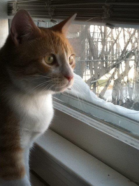 Tommy watching the great outdoors!