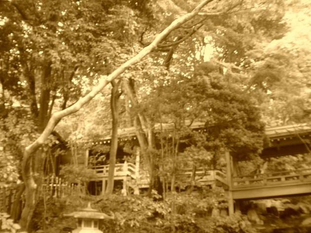神代植物園&深大寺 (36)