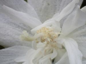 オリンパス TG4 植物 接写 (4)