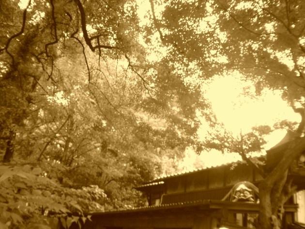 神代植物園&深大寺 (55)