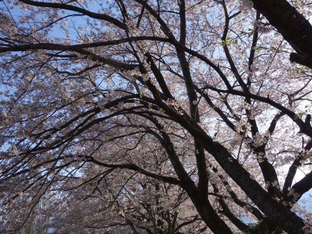 黒沢川 (145)