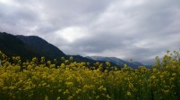 安曇野風景写真 twitter@tenmasawa (64)