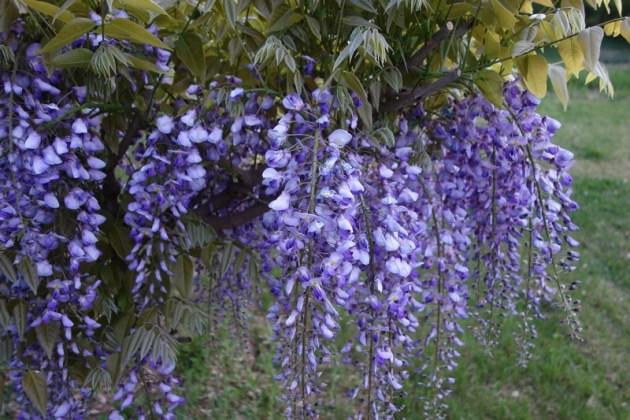 春の花 5月 (2)