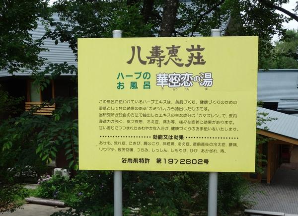 カミツレ研究所・八寿恵荘 (7)