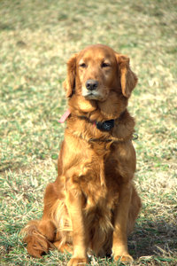 covenant-doggie