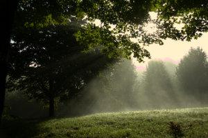 covenant-mist