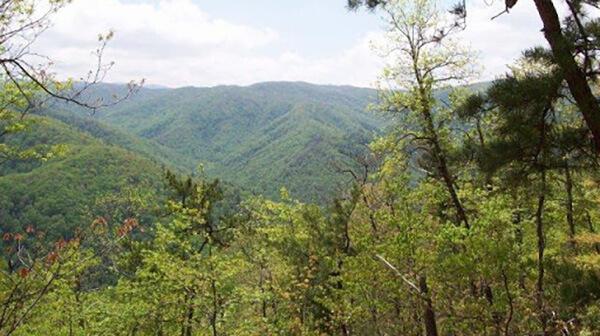 Flats Mountain Trail