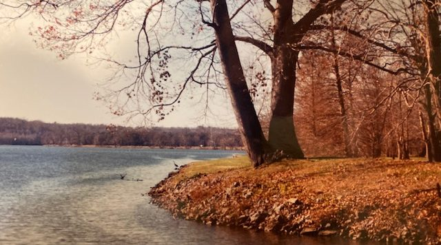 Lake on left with grassy bank and large tree on right