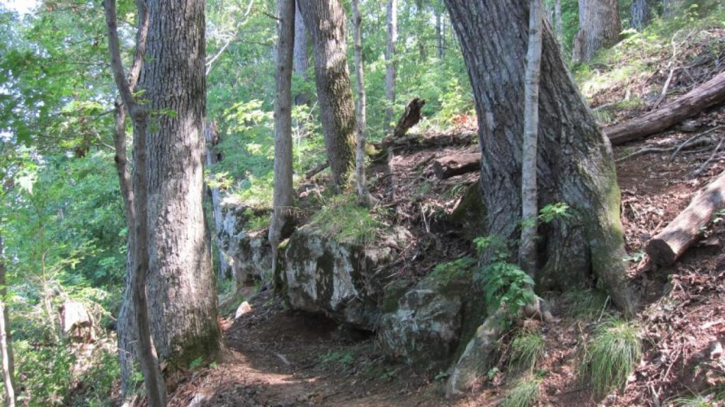 Rocky hillside with large trees. Narrow trail visible