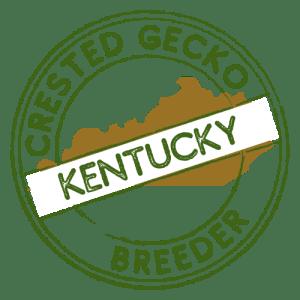 Crested Gecko Breeders in Kentucky