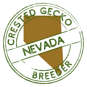 Crested Gecko Breeders in Nevada