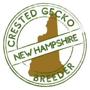 Crested Gecko Breeders in New Hampshire