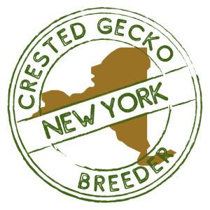 Crested Gecko Breeders in New York