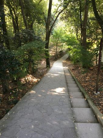 御神木と書かれた鳥居をくぐり、整備された歩道を2分ほど歩くと・・