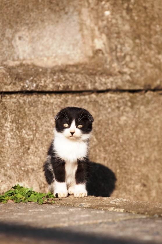 foto foto menakjubkan dari pulau Surga Kucing di Jepang - Foto Kucing di Fukuoka Jepang 03
