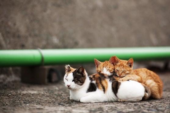 foto foto menakjubkan dari pulau Surga Kucing di Jepang - Foto Kucing di Fukuoka Jepang 12
