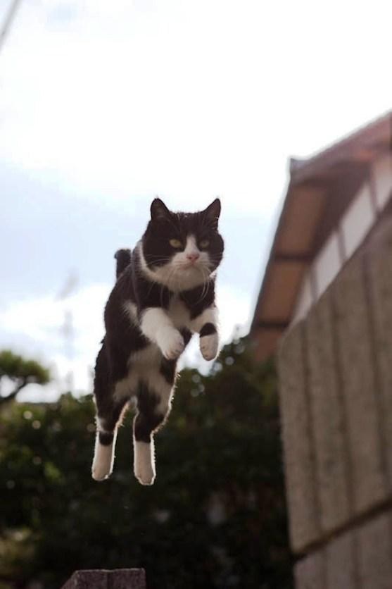 foto foto menakjubkan dari pulau Surga Kucing di Jepang - Foto Kucing di Fukuoka Jepang 18