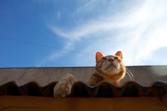 foto foto menakjubkan dari pulau Surga Kucing di Jepang - Foto Kucing di Fukuoka Jepang 21