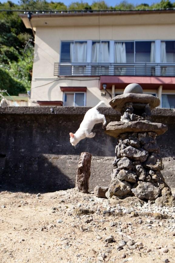 foto foto menakjubkan dari pulau Surga Kucing di Jepang - Foto Kucing di Fukuoka Jepang 29