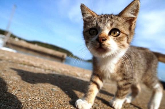 foto foto menakjubkan dari pulau Surga Kucing di Jepang - Foto Kucing di Fukuoka Jepang 42