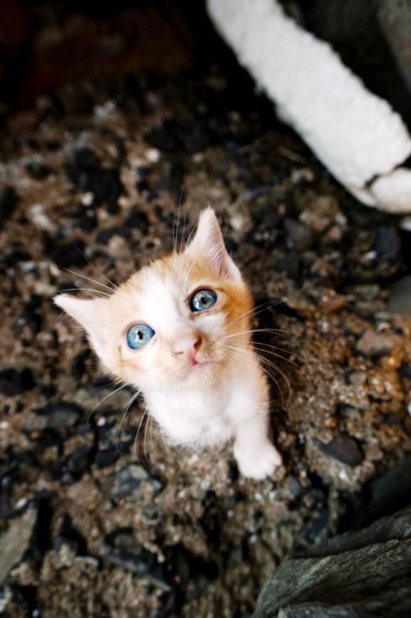 foto foto menakjubkan dari pulau Surga Kucing di Jepang - Foto Kucing di Fukuoka Jepang 46