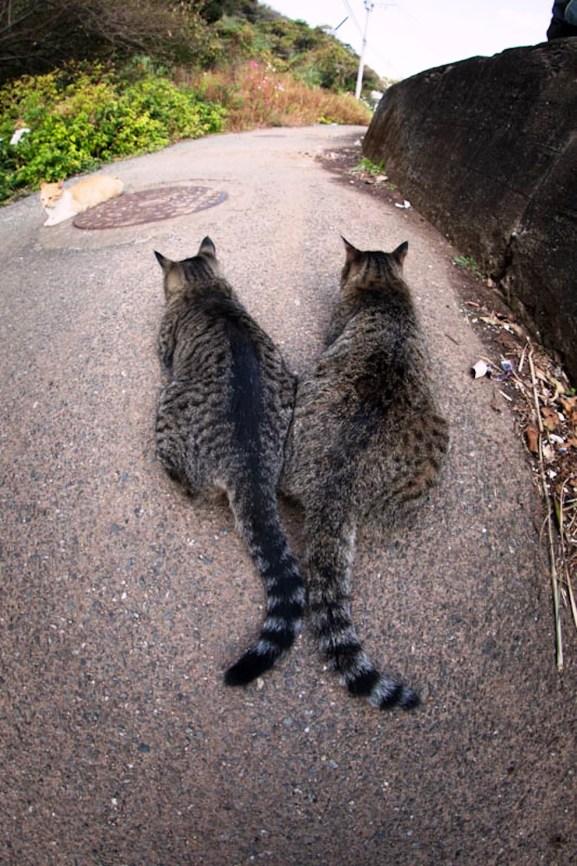 foto foto menakjubkan dari pulau Surga Kucing di Jepang - Foto Kucing di Fukuoka Jepang 47