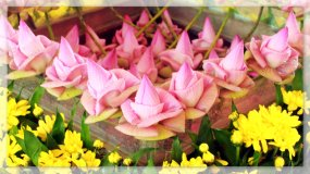 The Droplets on The Pinkish Lotus Flowers