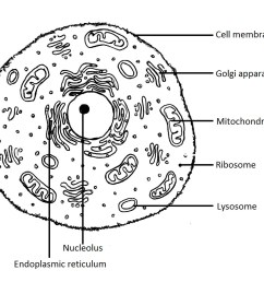 animal cell diagram labeled black and white rh animalia life club eukaryotic cell diagram black and white plant cell structure diagram black and white [ 998 x 909 Pixel ]