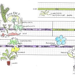 Diagram Of Evolution Timeline 2001 Honda Civic Parts Earth And Plant Tentative Scientist