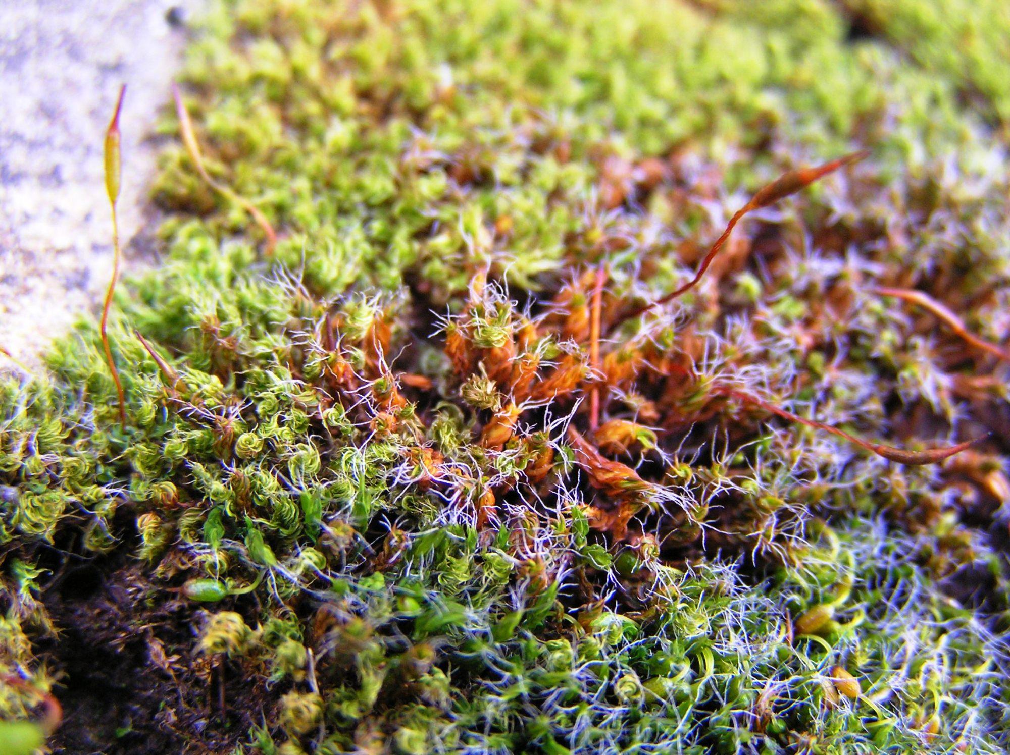 hight resolution of mosses