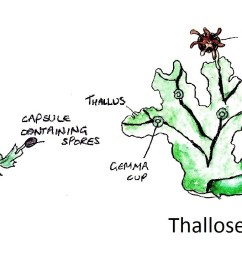 leafy and thallose [ 1323 x 725 Pixel ]