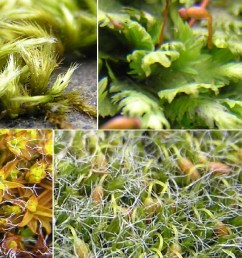 mosses found in highgate cemetery [ 1710 x 673 Pixel ]