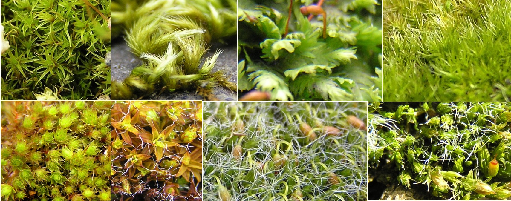 hight resolution of mosses found in highgate cemetery
