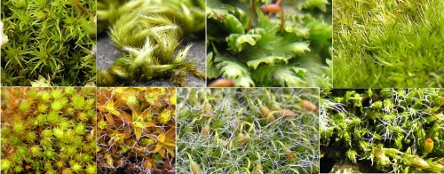 small resolution of mosses found in highgate cemetery