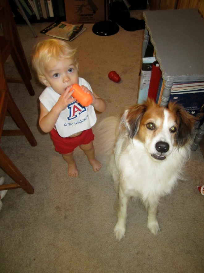 Begging dog - Ten Thousand Hour Mama