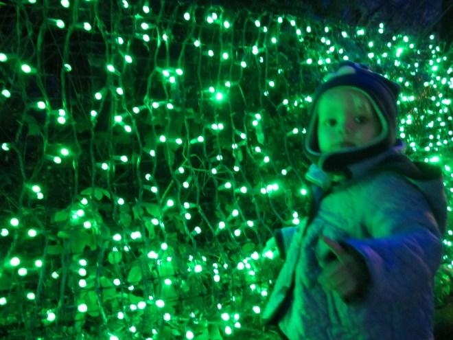 Zoo Lights - Ten Thousand Hour Mama