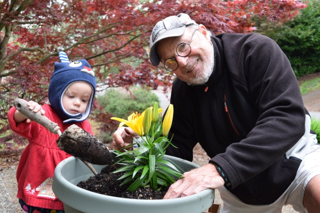 Toddler planting flowers with grandpa - Ten Thousand Hour mama