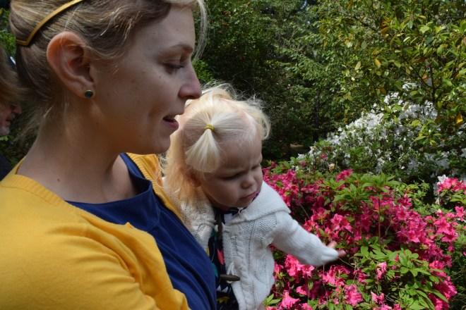 Toddler azalea Hendrick's Park